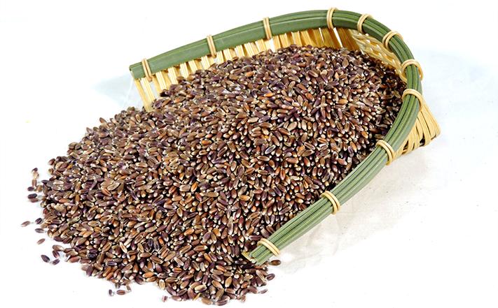 有机小麦米
